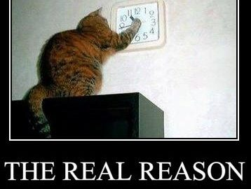 Yeah - Lets blame it on the cat....Wait I don't have a cat...