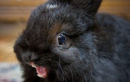 Both of my co-hosts get a bit like this when they see bunnies