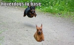 Ok in Gow's defense they are a very cute breed of dog - and they can fly!