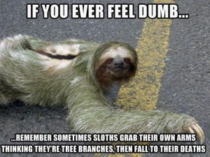 funny-sloth-branch-death-dumb